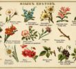Time for Some Pretty Bits: The Meanings of Flowers in Russia