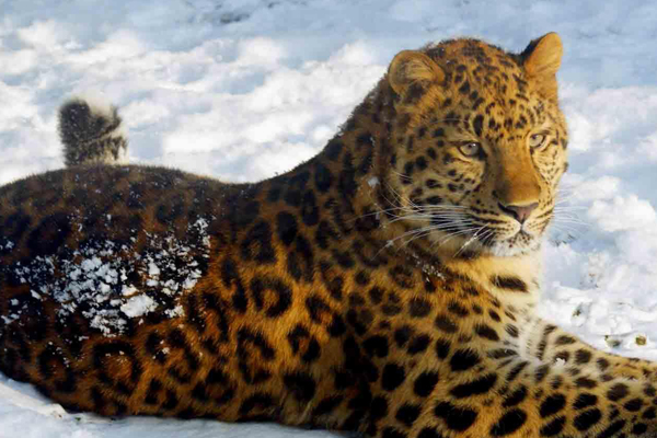 11 Endemic Animals that You Can Only Find in Russia