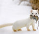 6 Animals That Lives in Siberian Tundra