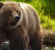 7 most dangerous animals in Russia