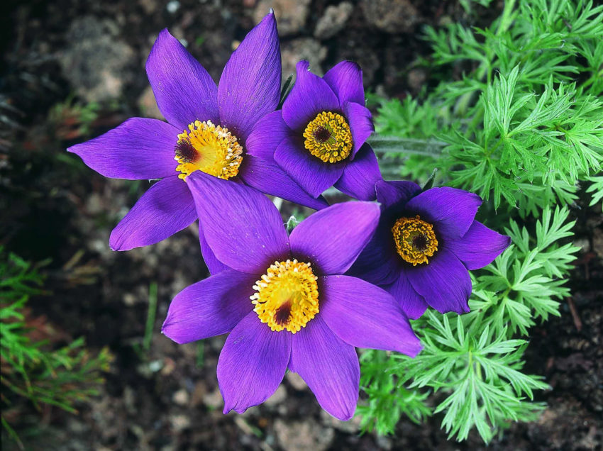 6 Plants in Tundra of Northern Russia We Should Explore