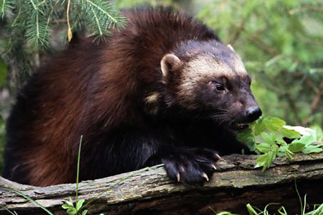 7 Endemic Animals That Live in Ural Mountains