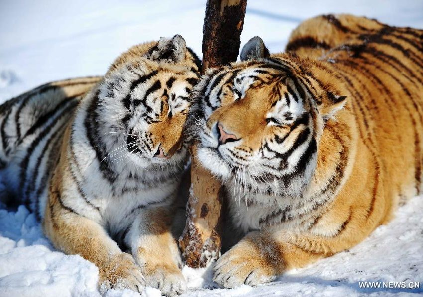 6 Rare and Exotic Animals in Russia