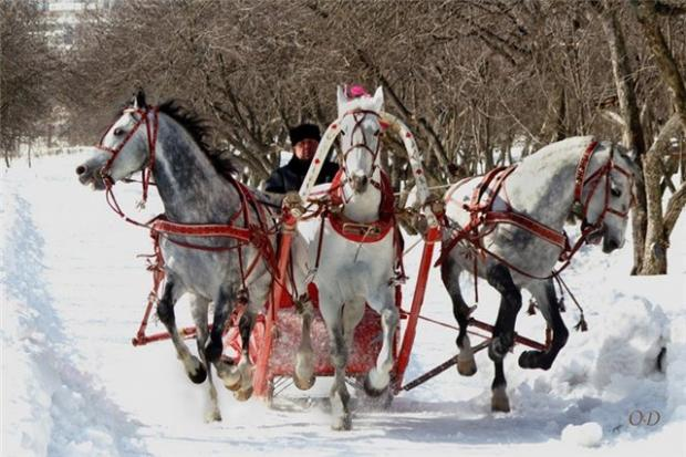 7 Possible things you can do during winter in Russia