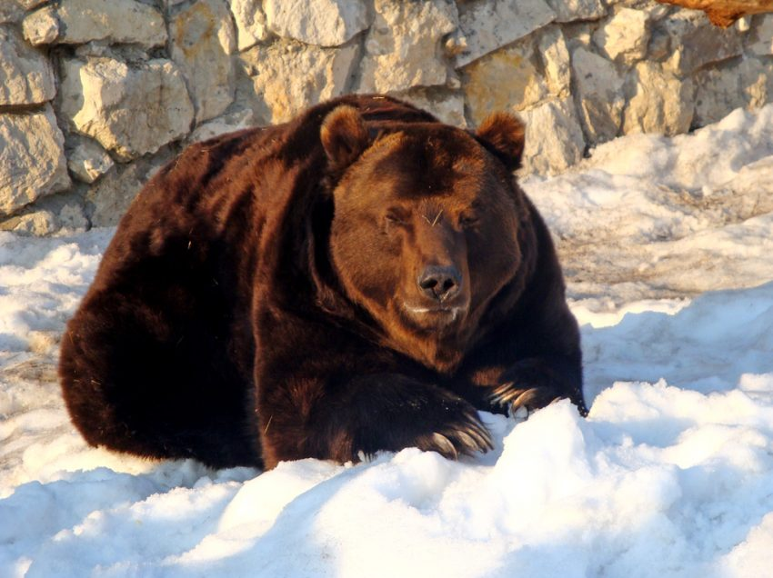 8 Things You Need to Know About Russian Bear