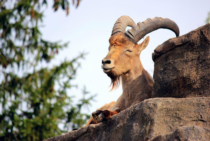 Top 6 Endemic Animals Living In Caucasus Mountain Range